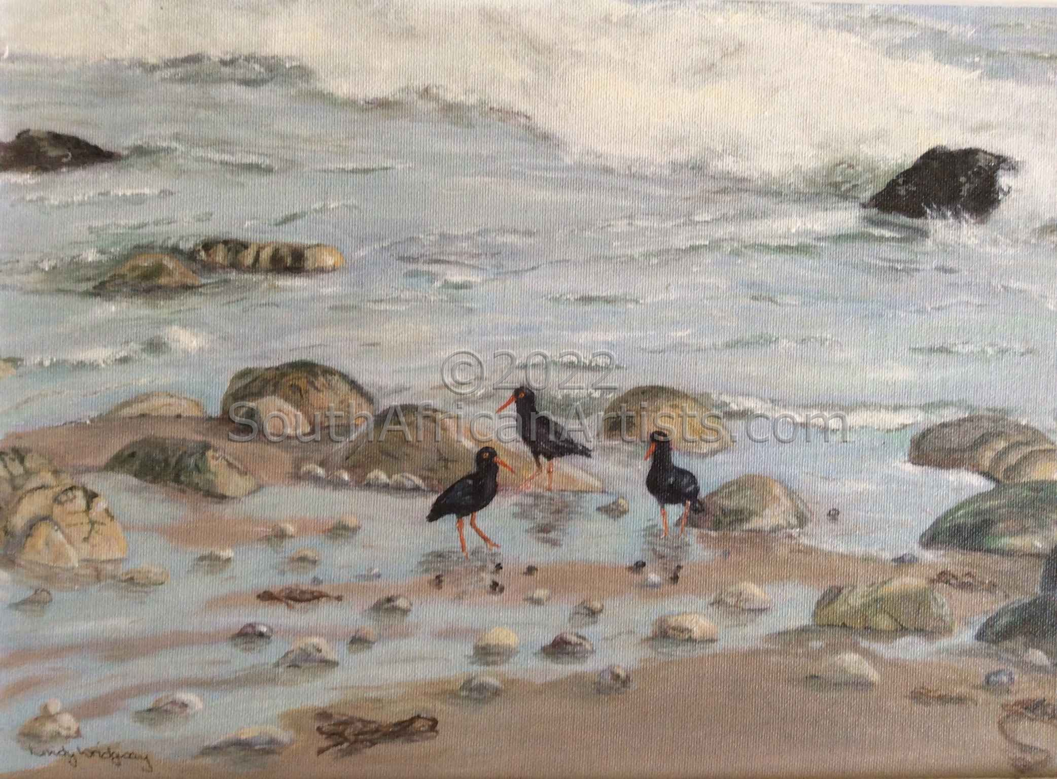 """Oyster Catchers"""