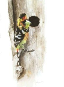 """Crested Barbet at Nesting Hole"""