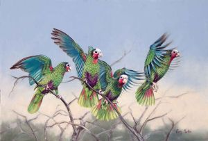 """Wild and Free, Cuban Parrots"""