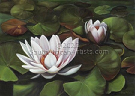 """Waterlily 2"""