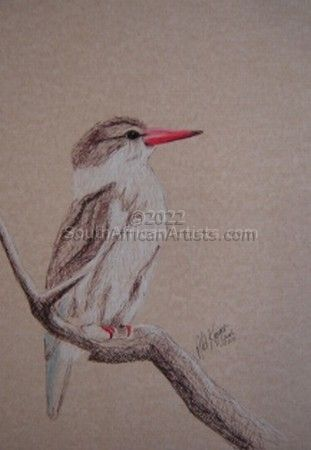"""Brown Hooded Kingfisher"""