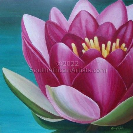 """Waterlily Close Up"""