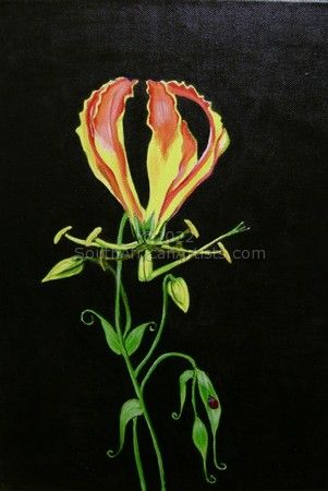 """Flame Lily"""