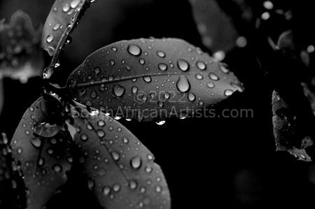 """Leaves With Dew"""