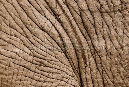 """Trevor Savage - Elephant Hide"""