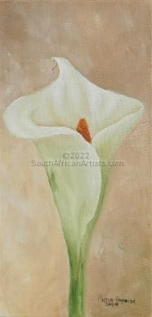 """Arum Lily 2"""