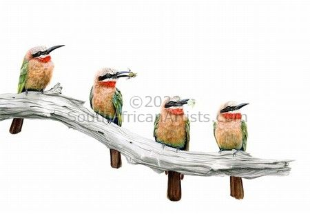 """White Fronted Bee-Eaters"""