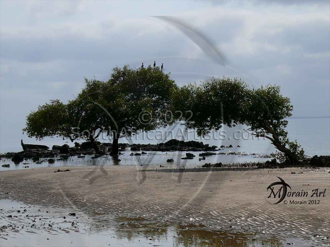 """Trees in Water - Mangrove"""