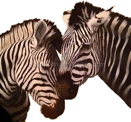 """Zebra Couple"""