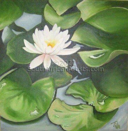 """Waterlily"""
