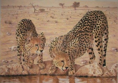 """Cheetahs at Waterhole"""