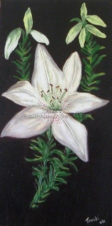 """The White Lily"""