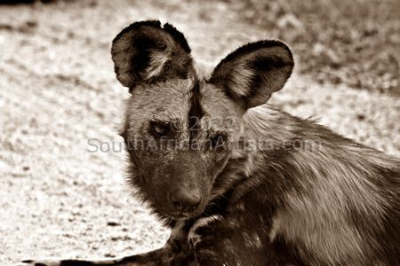 """Painted Dog (Sepia)"""