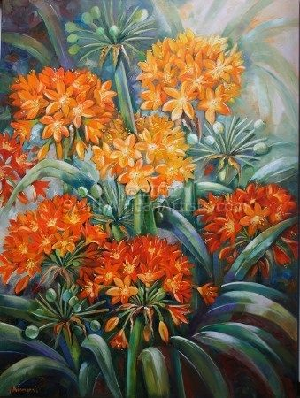"""Clivias From My Garden"""