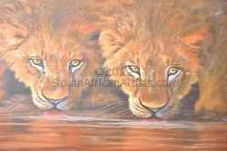 """Two Male Lions Drinking Water"""