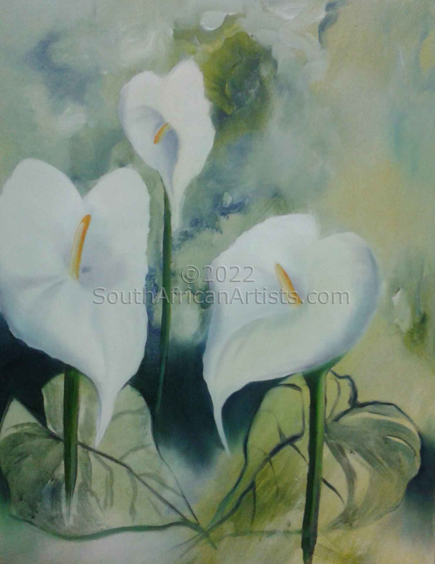"""Arum Lilly's"""