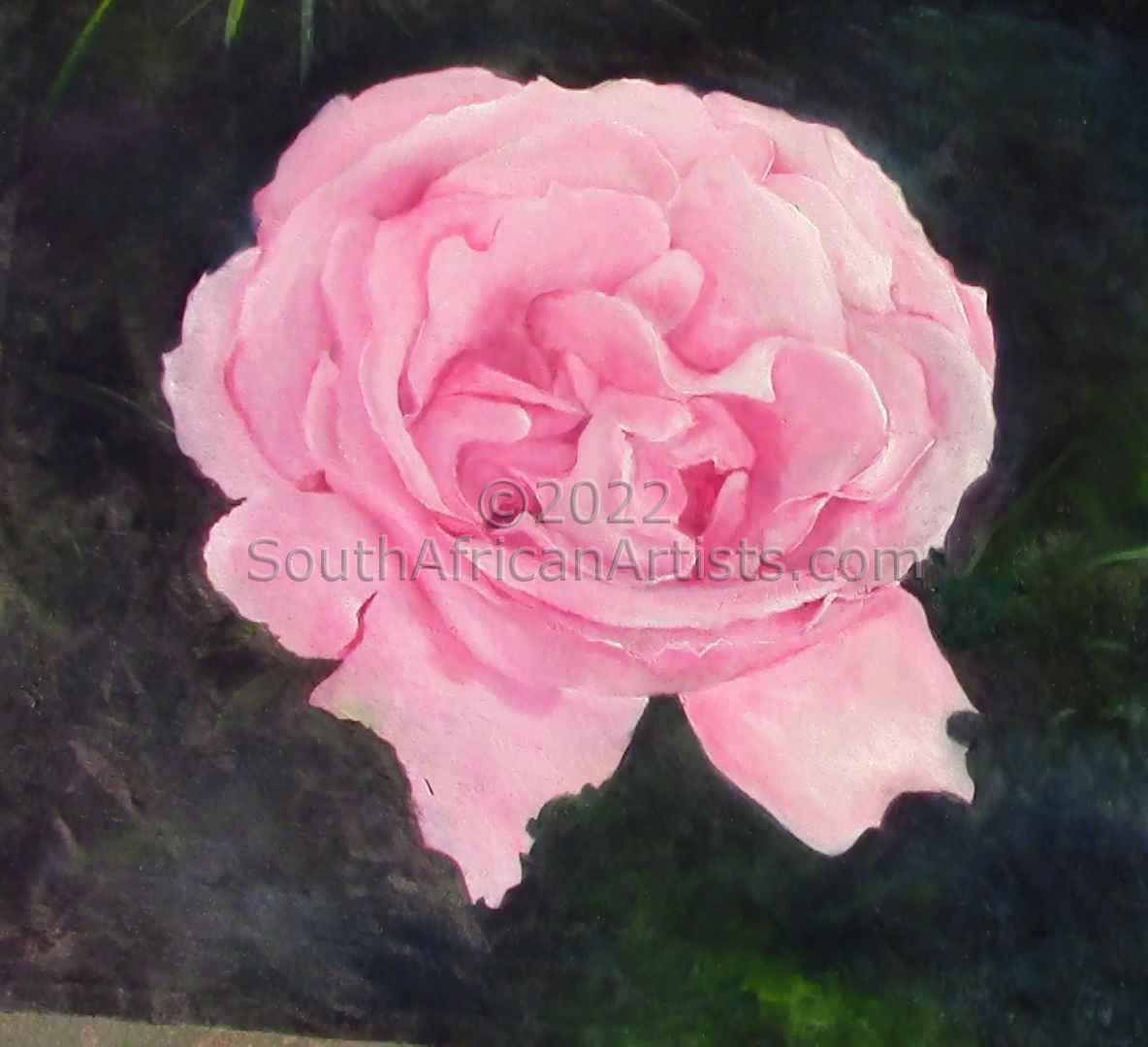 """Pink Rose Open"""